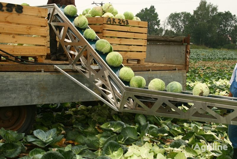 новый конвейер SIMON для уборки капусты